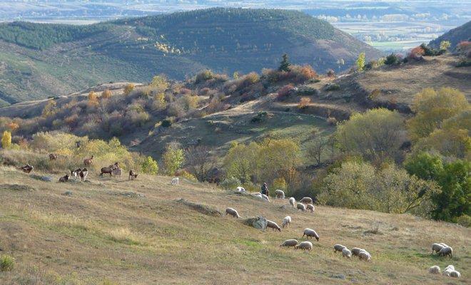 Odeillo,shepherd.jpg