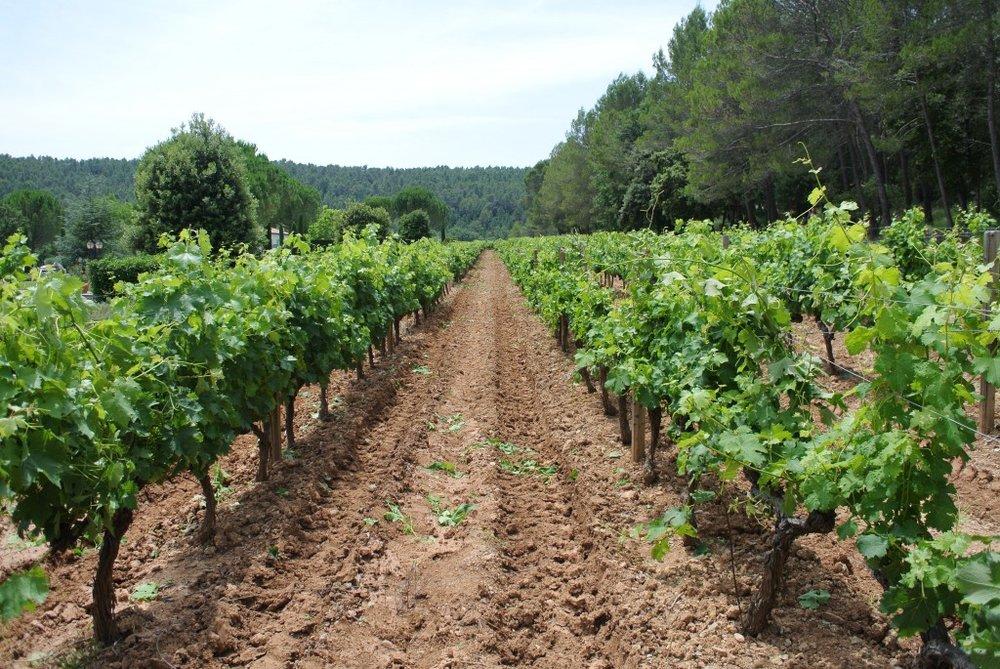 Vakre omgivelsar og mange vinmarkar. Domaine Ott som er å finne i Noreg, smakte eg for fyrste gong sommaren 2014. Foto: Anniken England