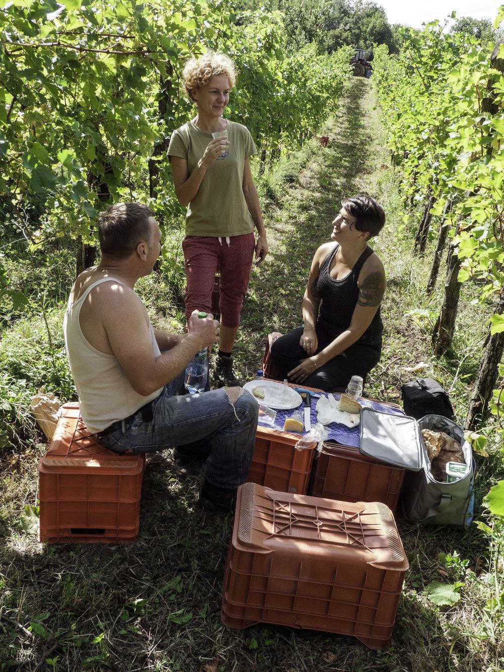 Stekar lunch in the vines.jpg