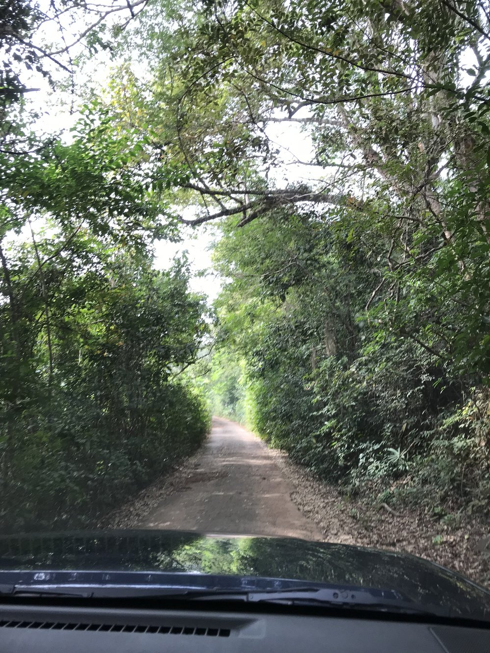 The road to the chimp rescue.  Not long before the big hill.