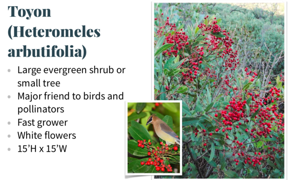 DOWNLOAD A CALIFORNIA REALTOR'S GUIDE TO NATIVE PLANTS - [.PDF File]