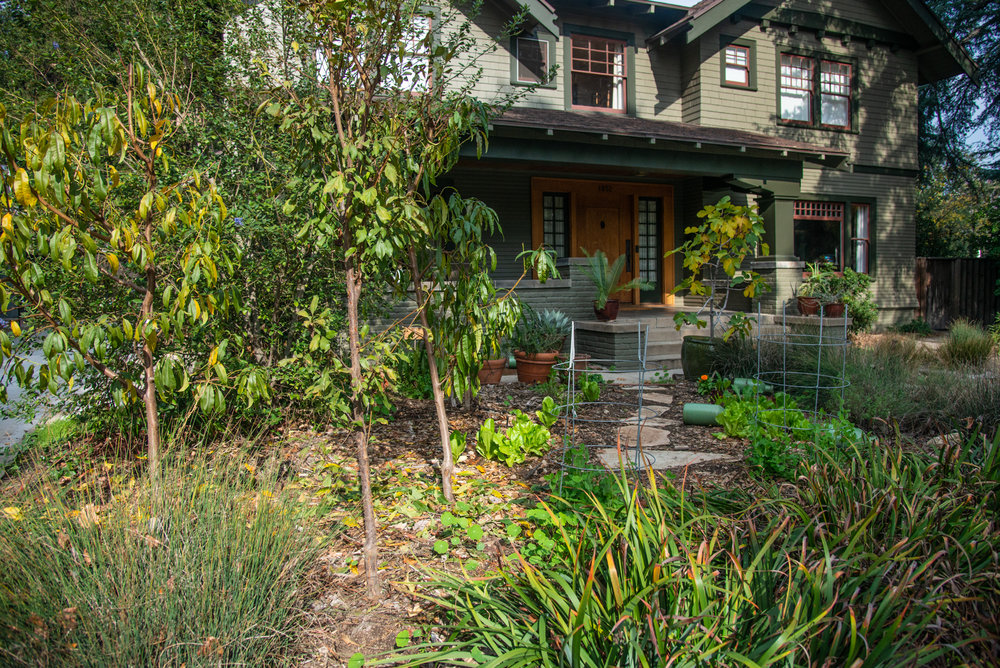 The Eisenstein's edible garden: kid friendly, surrounded by native irises and juncus and wildflowers.  (Photo: David Newsom)