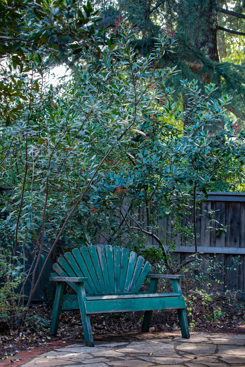 Cues To Care: Meditation among the Toyon.  (Photo: David Newsom)