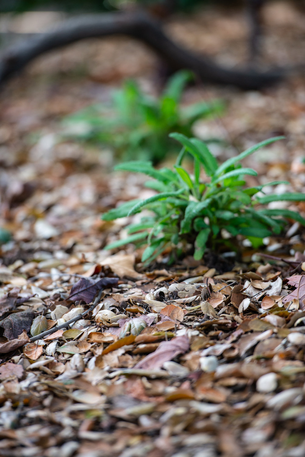 Leaf litter is as key to creating habitat as the plants we choose.  (Photo: David Newsom)