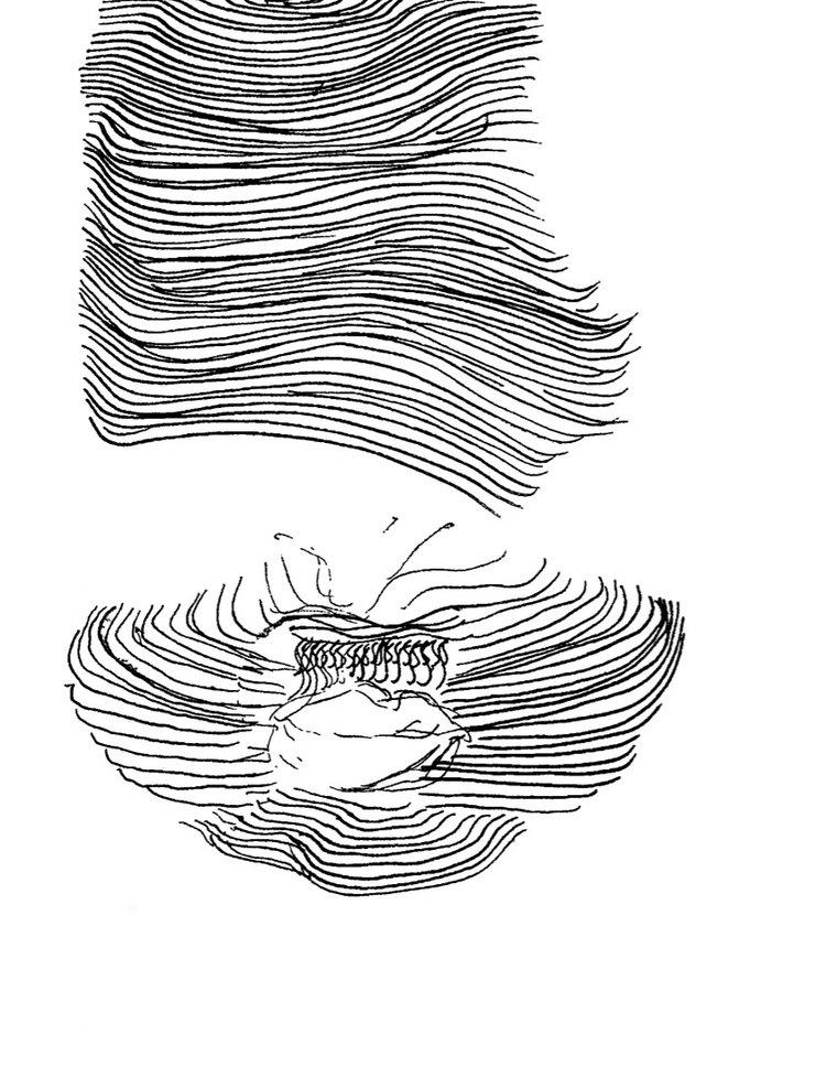 sketch4.jpg