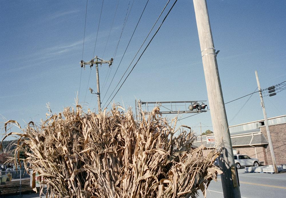Corn-Picture28-001.jpg