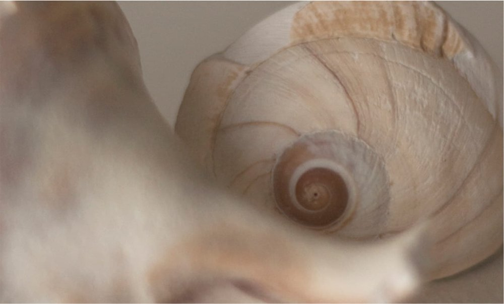 - THE COLOR STORY: We pulled a shell from the beach and studied the multitude of whites, sand tones and hints of violet. These colors have an ephemeral quality that change in the sunlight. As you move upwards through the house the palette lightens. The material palette consisted of natural materials: hemp, linen, cotton and whicker. Woven grass shades, white linen sheers, a hand painted bead board and white washed beams contribute to the sense of serenity and reinforce the harmony of the house and its connection to the beach.