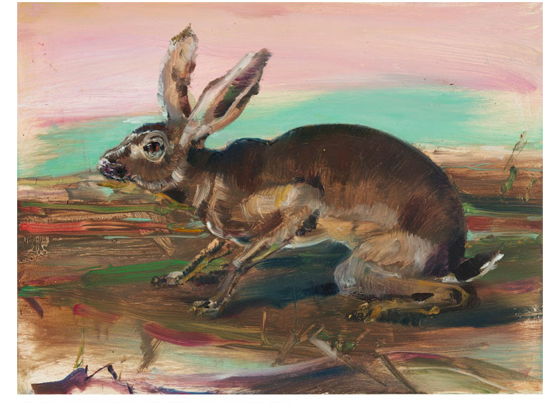 Audabon Duher Cover of a Hare