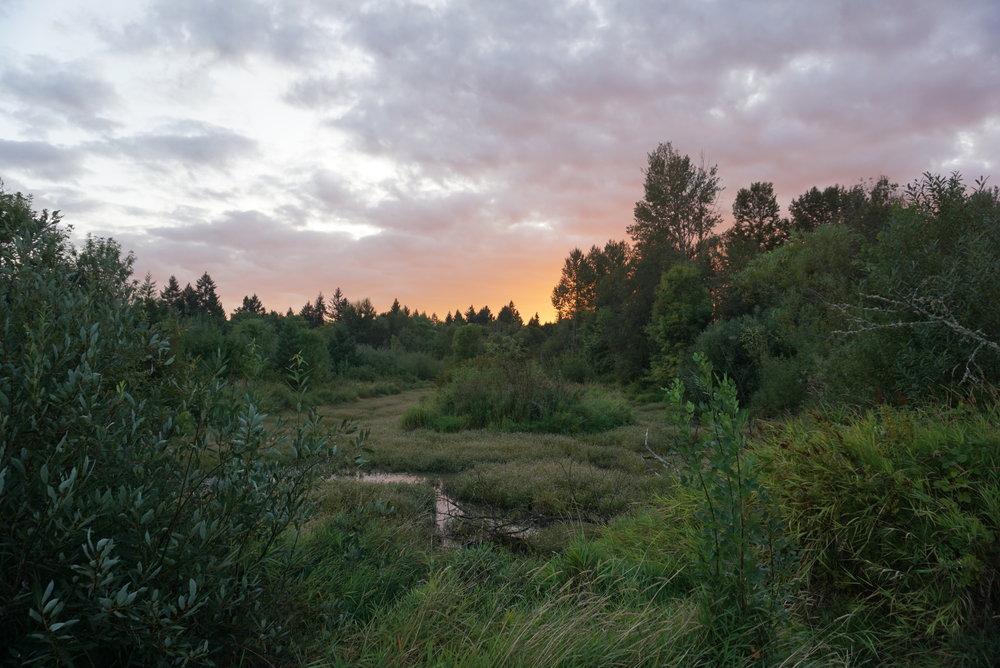 Cook Park Tigard Oregon