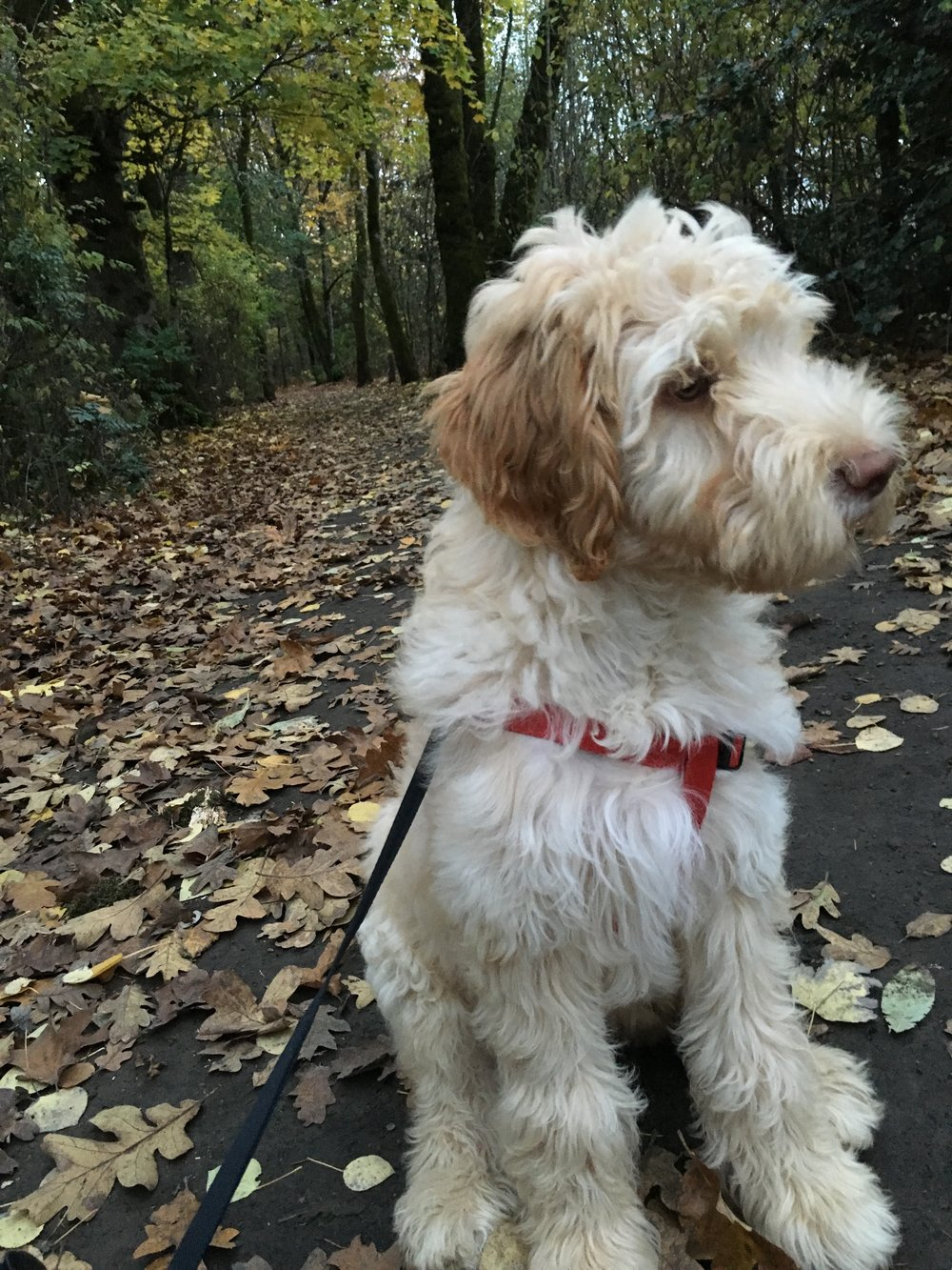 Charlie Puppy 1.JPG