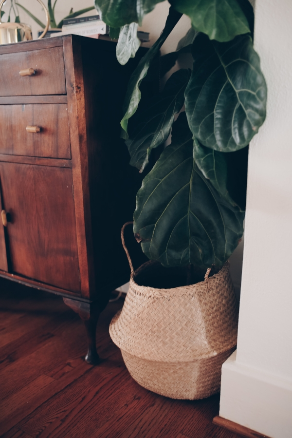 Large fiddle fig tree in seagrass basket as plant stand in dining room via Foraged Home