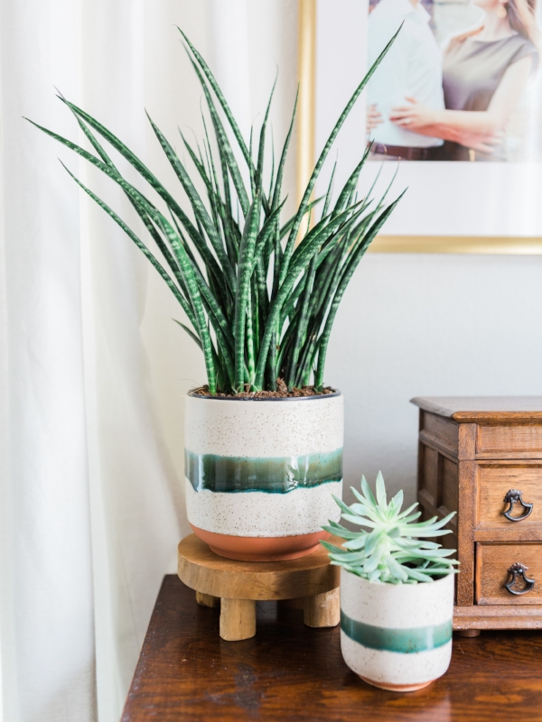 Indoor plant holder for bohemian style home via Foragedhome.com