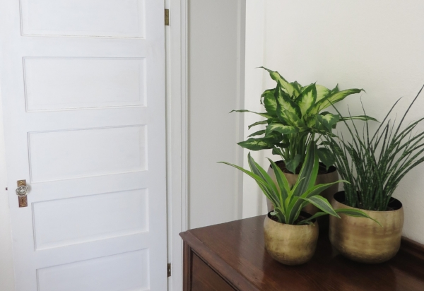 Brass metal indoor planters for plants from Foragedhome.com