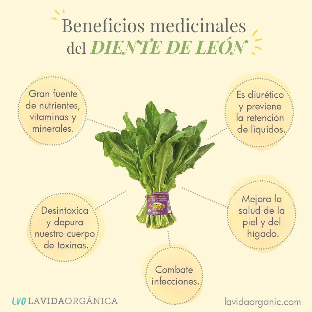 5 Beneficios Medicinales Del Diente De León La Vida Orgánica