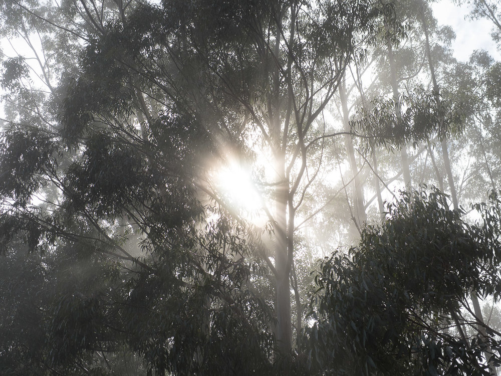 Morning sunlight and mist amongst the treetops.