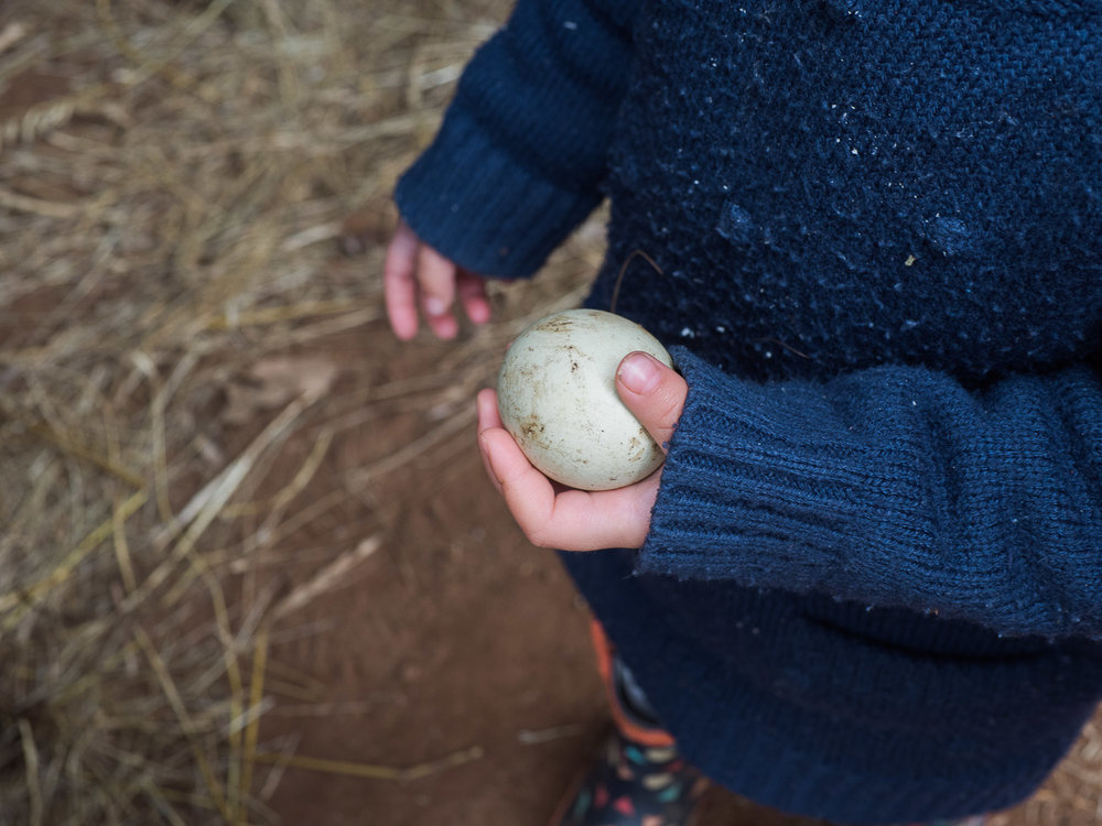 Collecting eggs is the highlight of any farm stay with kids.