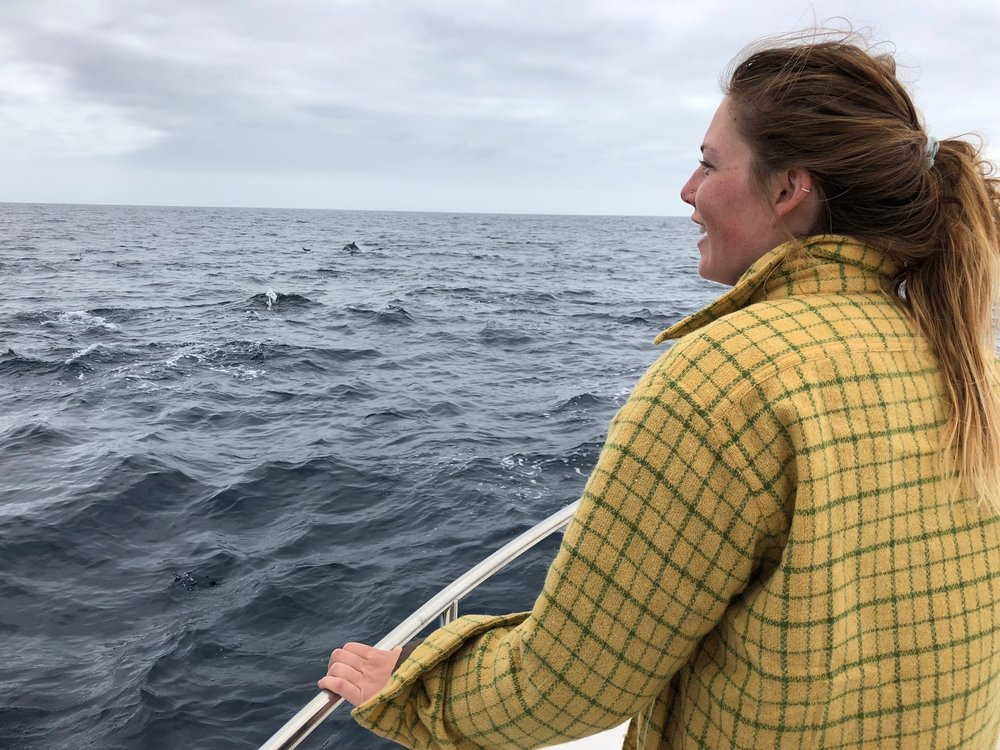 Dolphins galore. You can't see them, but they're there. Photo: Mark Portman