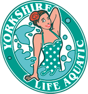Yorkshire Life Aquatic C.I.C. is an arts organisation specialising in synchronised swimming style dance performance in and out of water. They promote a positive body image, health & well-being.