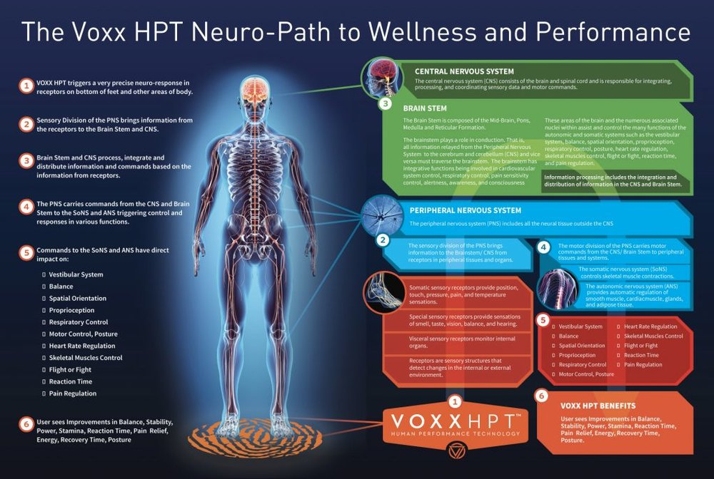 neuro-path-graphic-1024x688.jpg