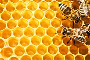 honey+comb (2).jpg