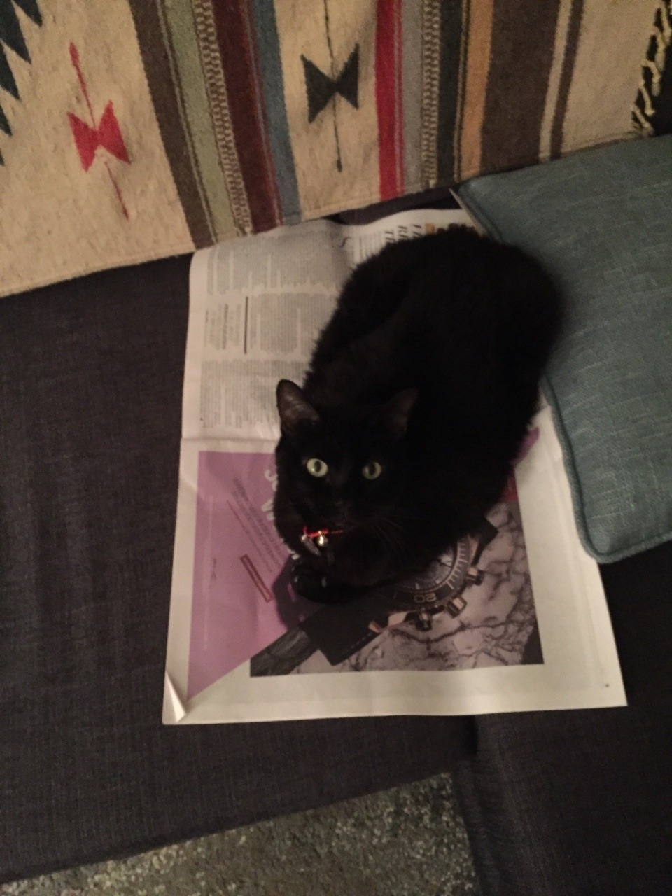 Layla loves the new format for the weekly printed issue of @wwd. I would also enjoy it if she would maybe find a new place to sit. -L