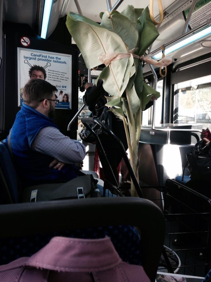 DC Banana Plant: Gone from the S2 bus, forever in our hearts.