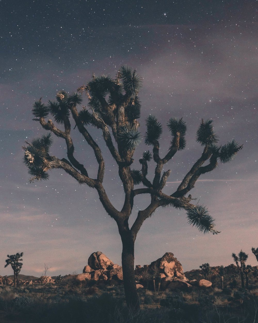 Nocturnal - Joshua Tree, 2017