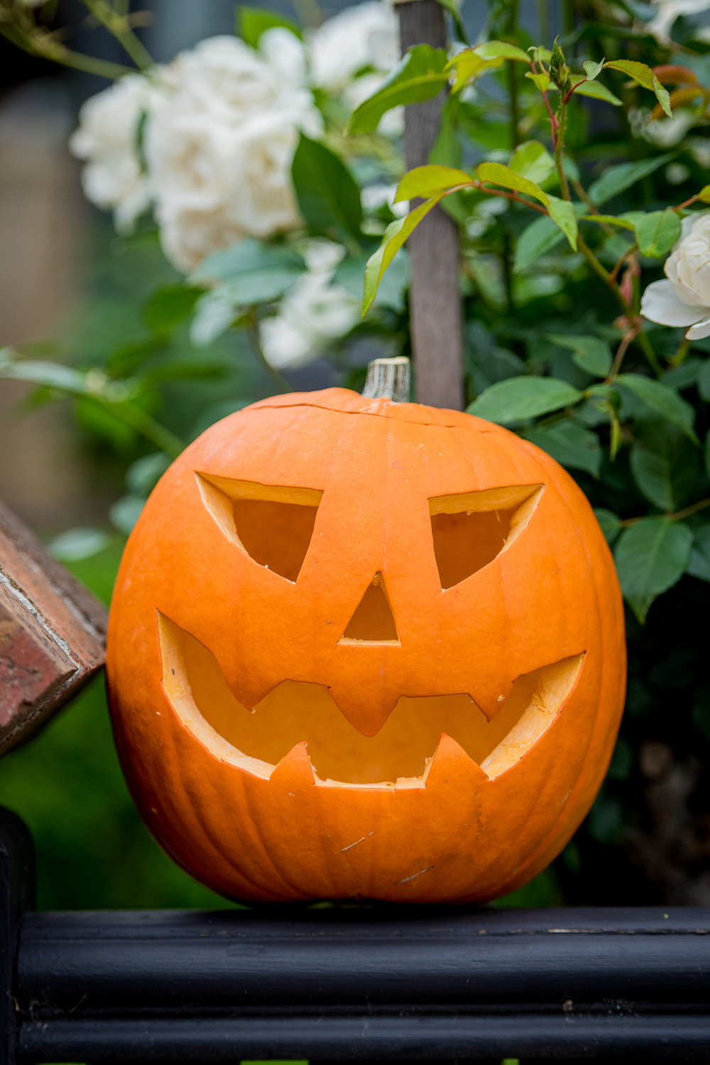 Oct 2017 Halloween 139.jpg