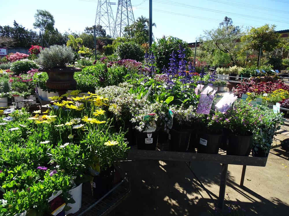 home-garden-centre-brisbane-western-suburbs-nursery.JPG