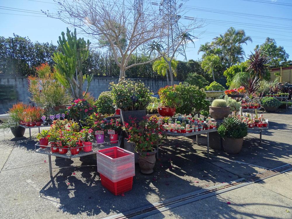 home-garden-centre-brisbane-western-suburbs-plants.JPG