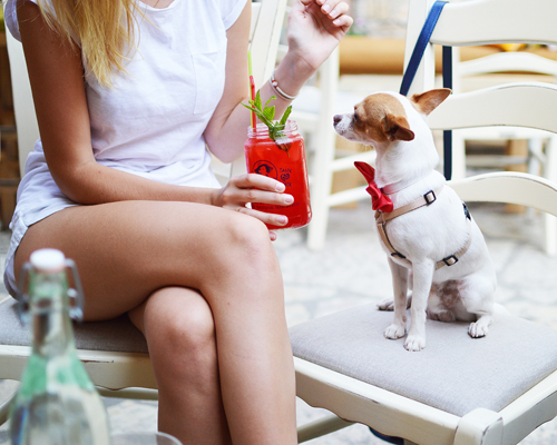brisbane-cafe-restaurant-dog-friendly.jpg