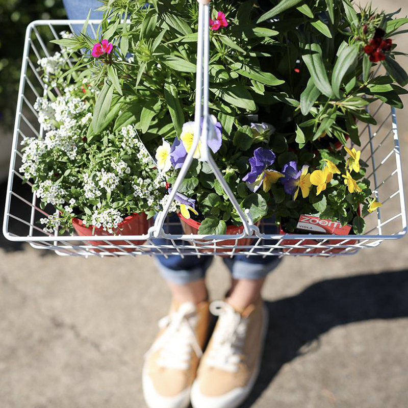 brisbane-garden-centre-fresh-flowers-pots.jpg