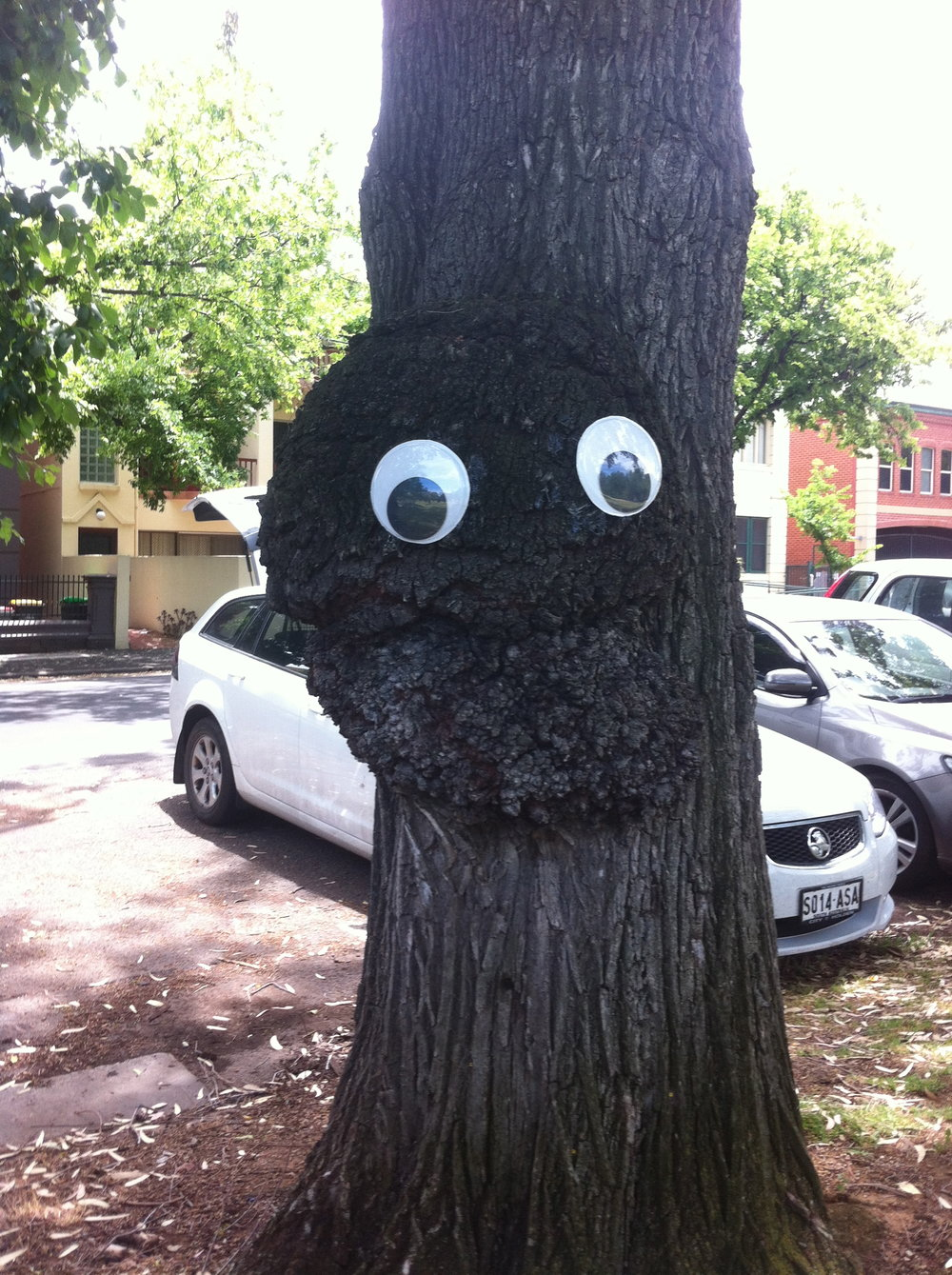 Eyes on a Tree