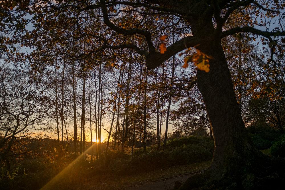 Autumn 011.JPG