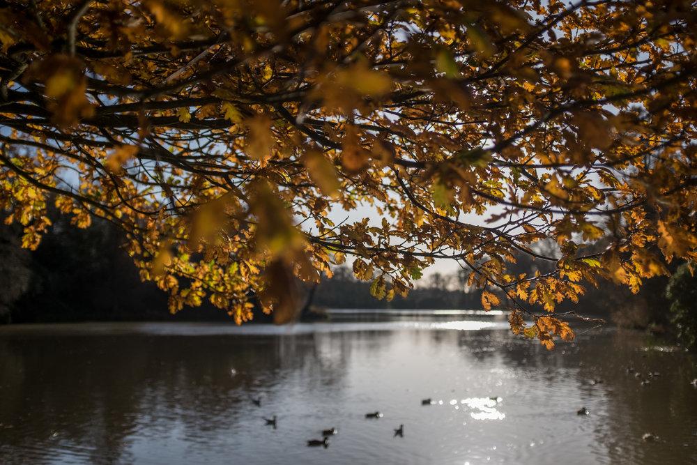 Autumn 031.JPG