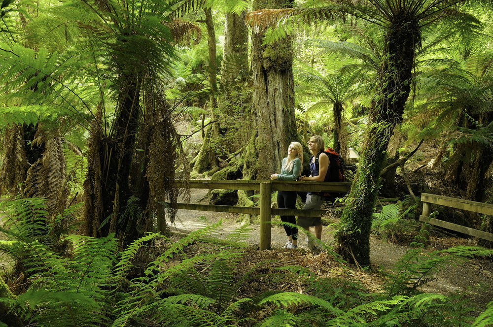 Tarra Bulga  National Park.jpg
