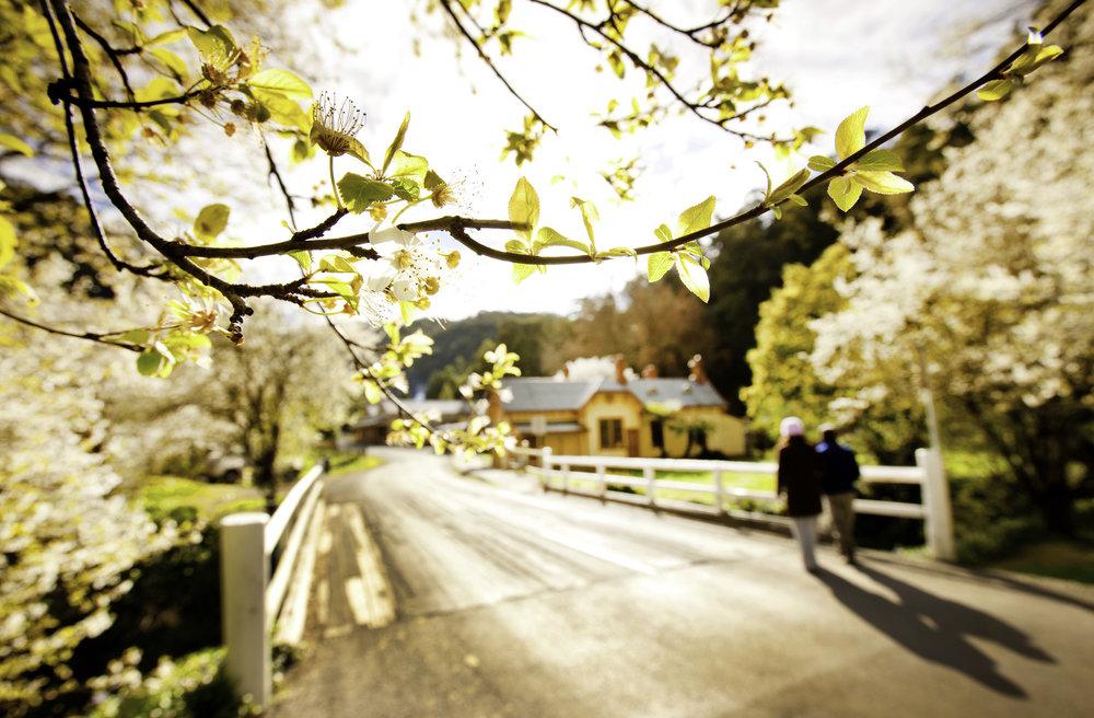 Walhalla in spring.jpg
