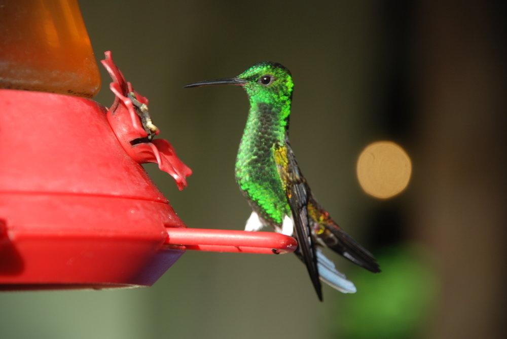 Trinidad & Tobago - Beautiful bird watching and leisurely exploration.