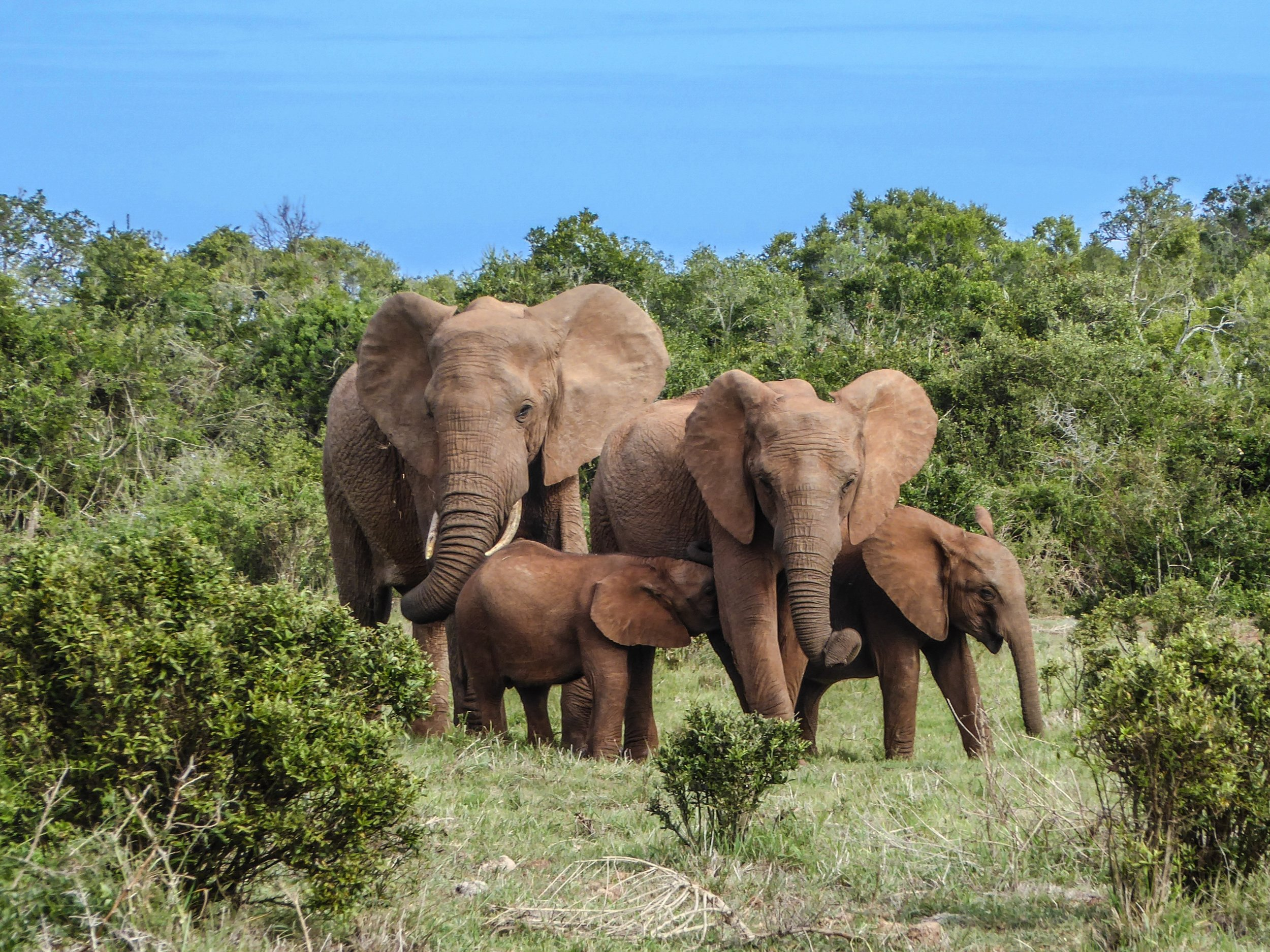 Wildlife and Battlefields in South Africa | Ramblers Walking