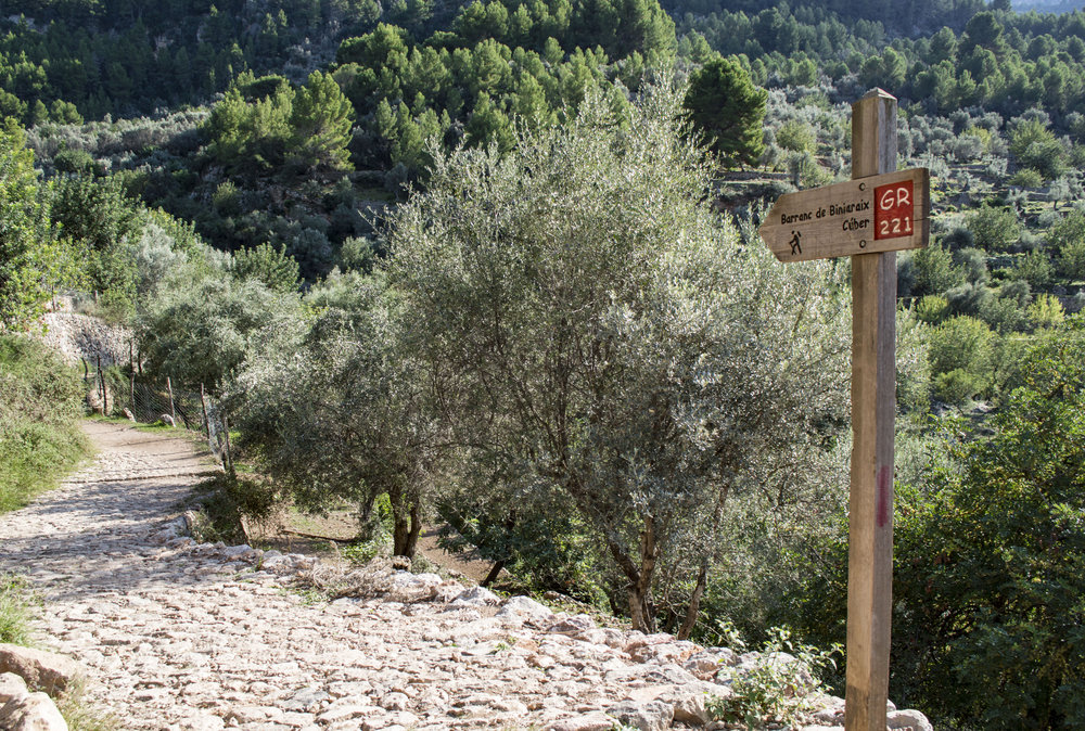Walking from Puerto de Soller    (  Majorca)    Grade 4 and Grade 7 Walking    from £1,190   Includes: Return flights, transfers, local transport costs, accommodation, breakfast and dinner each day and two Tour Leaders.
