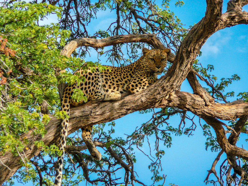 An African Journey -