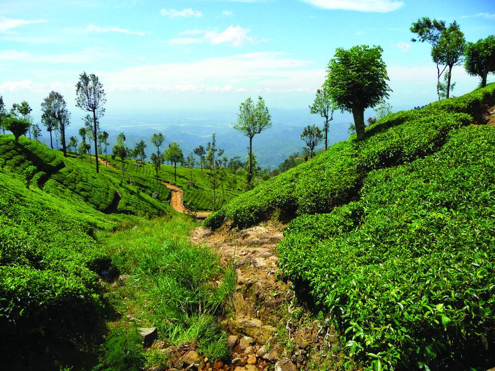 A Journey Through Ceylon -