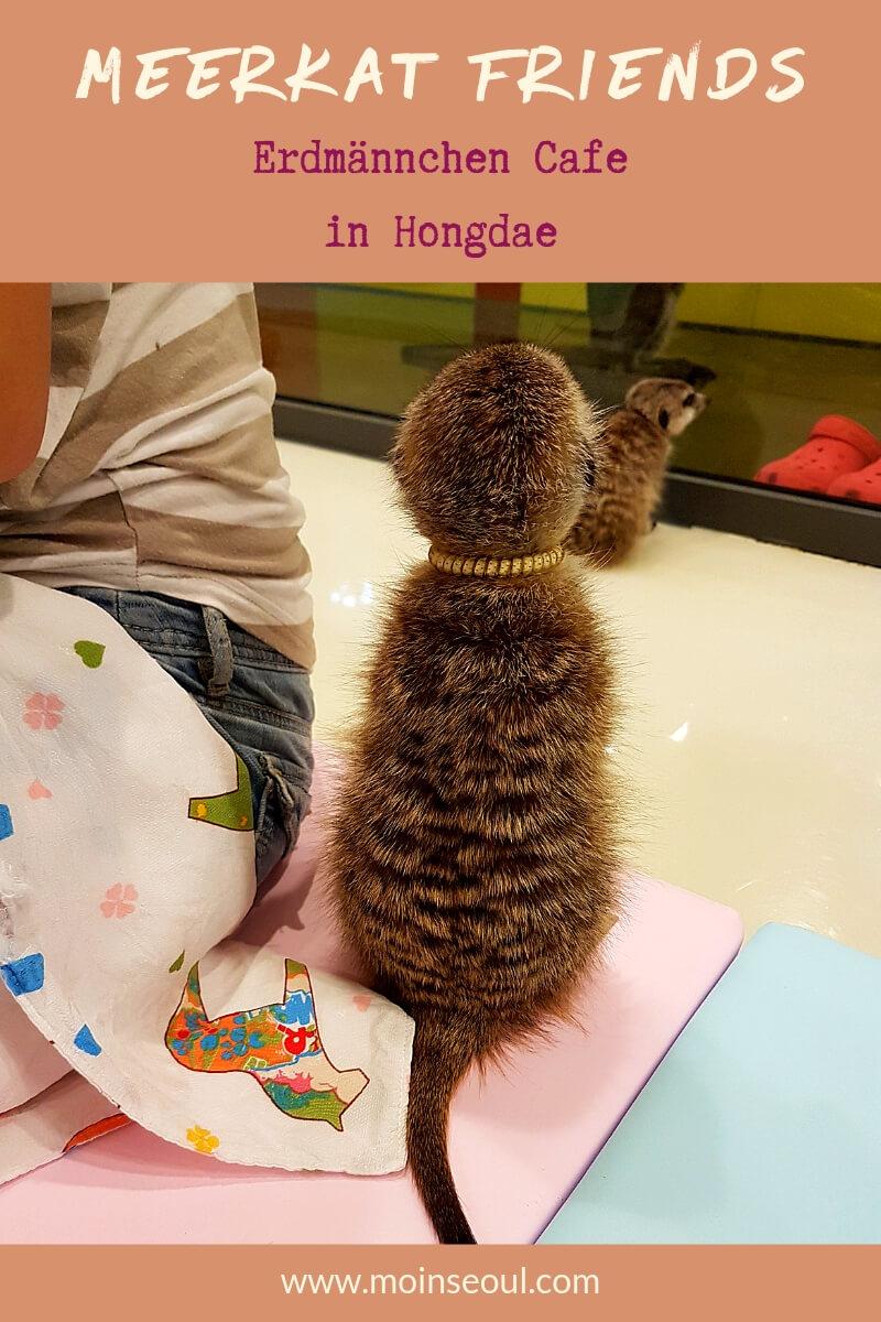 Meerkat Friends Hongdae 2 (1).jpg