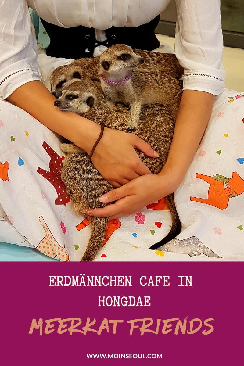 Meerkat Friends Hongdae 1 (1).jpg