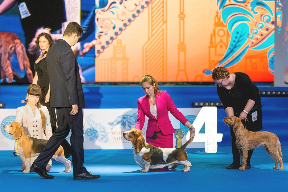 dog_competition_shutterstock_452575420.jpg