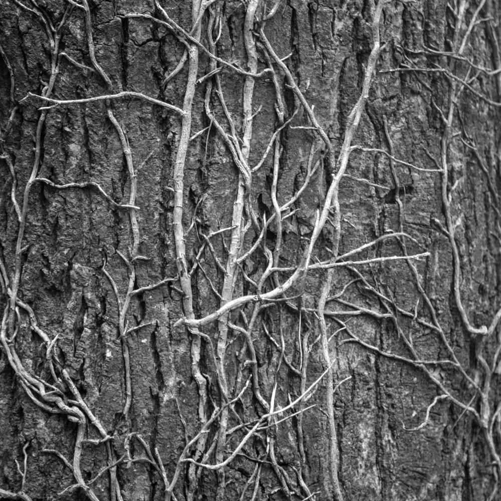 Tree Bark & Twine