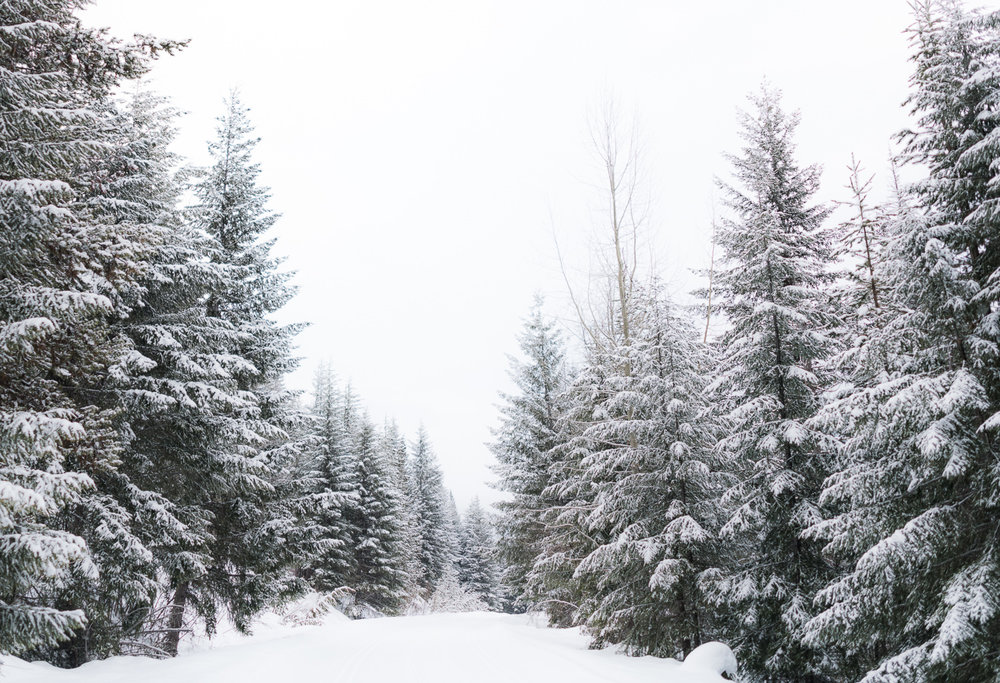 Cypress-mountain-snow-trees-engagement-photoshoot-location