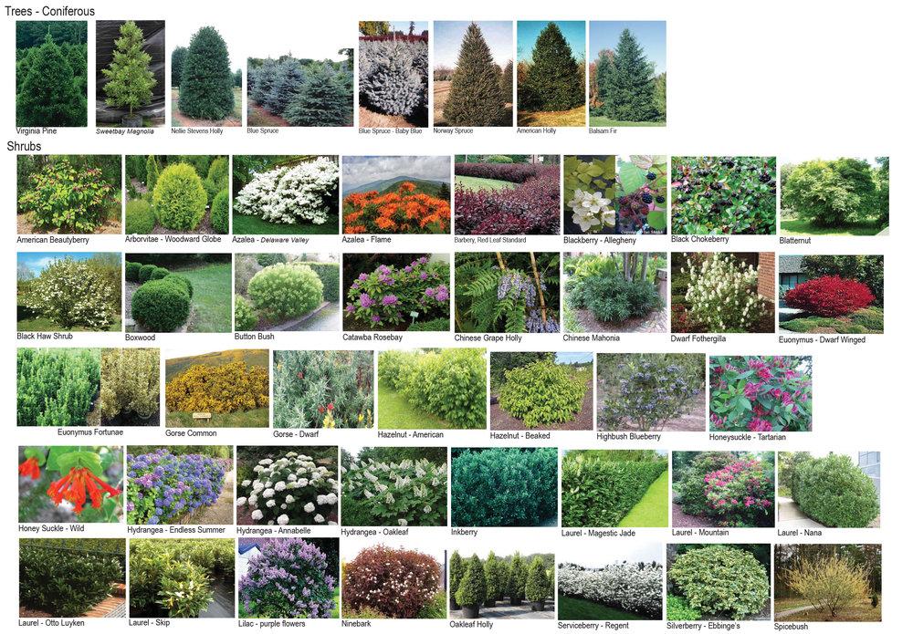 Plant Pallet-2.jpg