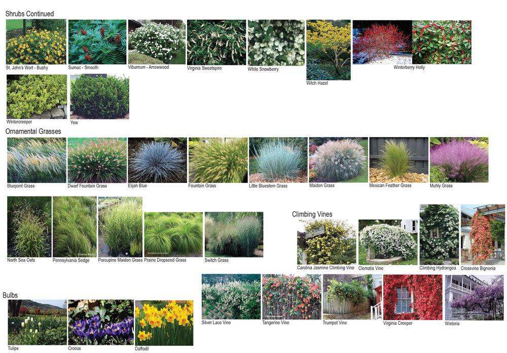 Plant Pallet-3.jpg