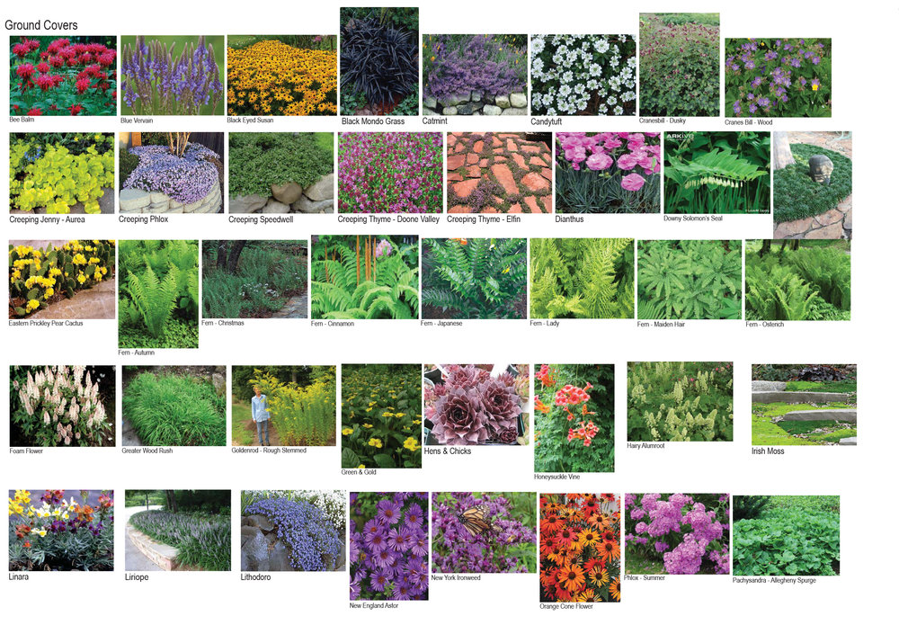 Plant Pallet-4.jpg
